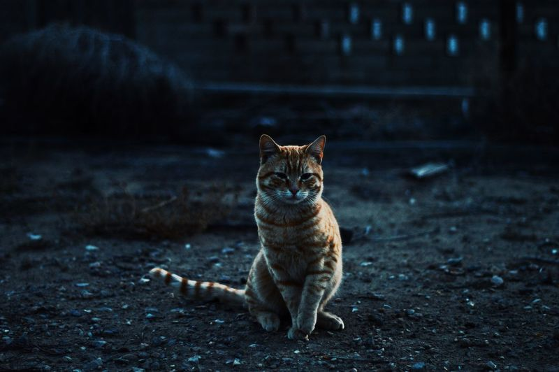 Vintage Style Cat Cats Orange Orange Cat Abandoned Abandoned Places Abandoned Buildings Abandoned House Abandoned Building Abandoned Warehouse Moody Mysterious Vintage Photo Vintage House Vintage Vintage Look Cats In Random Places Aged Beauty Cats In Pictures Cats In Nature Film Shot EyeEm Best Shots Vintage Stuff Vintage Furniture