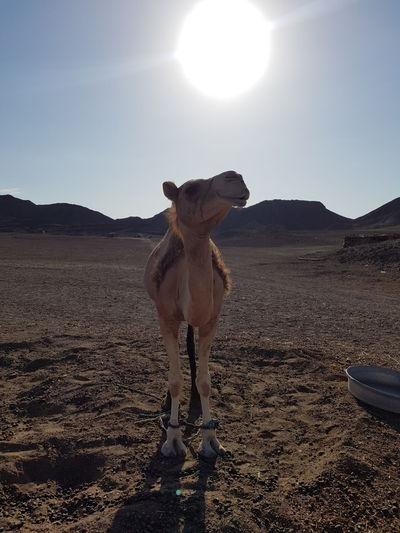 Desert Pets