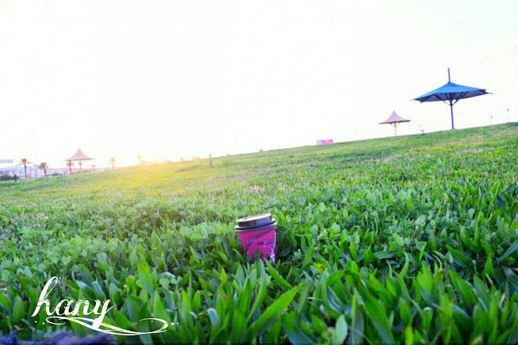 تصويري  Nikon Nikond3300 Enjoying Life زرع حديقة جلسه شاي السعودية  عرعر