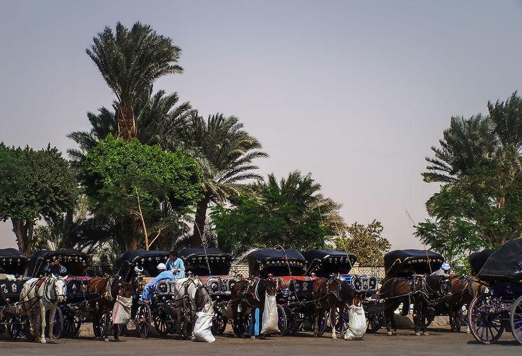 Horse carts on street