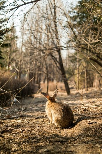 Brown rabbit sitting in forest