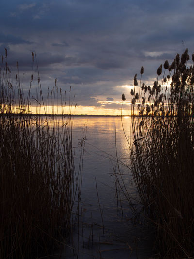 Sky Water Cloud - Sky Beauty In Nature Tranquility Scenics - Nature Tranquil Scene Plant Sunset Nature Grass Lake Reflection No People Growth Non-urban Scene Reed Outdoors Idyllic Timothy Grass Marram Grass