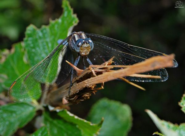 Animal Animals Looking At Camera Nature NikonD60 Animalphotography Catalunya Nikon Sun River Dragonfly Insect Martorell Leaf Full Length Insect Splashing Droplet Spider Close-up Animal Themes Spider Web Arachnid Damselfly Dragonfly Arthropod Animals Mating Fly Web Jumping Spider Animal Leg