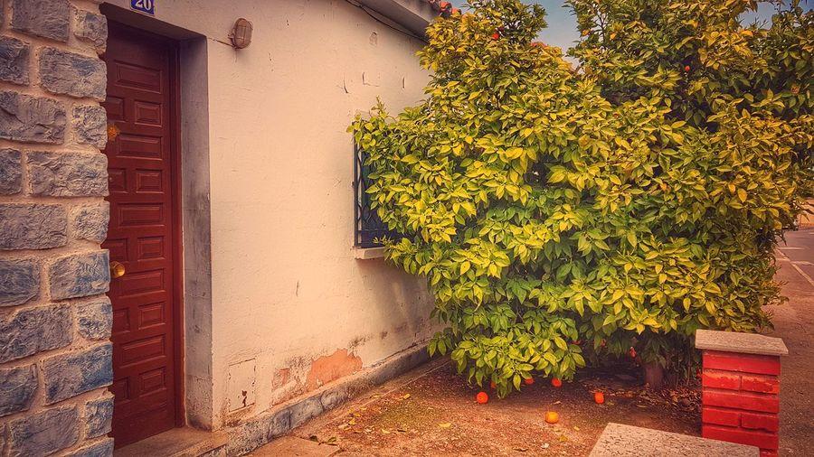 Naranjo Aragon,