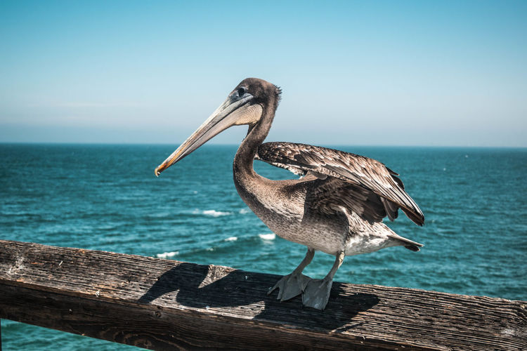 Crane by the ocean