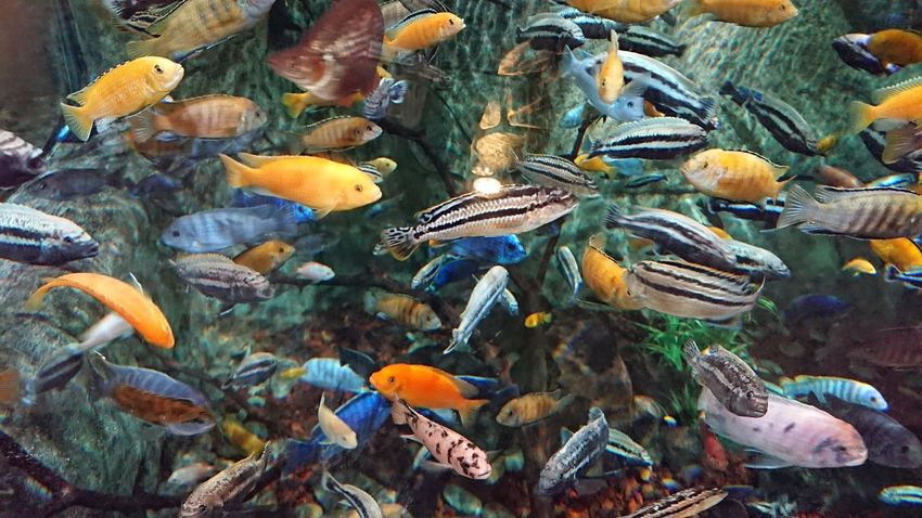 Colorful world🐠🐠 Colors Colorfull Colorful Full Of Colors Colorsplash Color Photography color palette Underwater UnderSea Fishes Aquarium Water_collection Beautiful Beauty In Nature Nofilter No Edit/no Filter EyeEm Nature Lover Underwater World Fish Tiny Natural Beauty Natural Pattern Tranquility Taking Photo Aqua WOW Wow!! Loveit