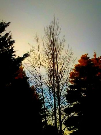 Tree Sky Bare Tree Nature Silhouette No People Branch Beauty In Nature Sunset Outdoors Scenics Treetop Togetherness Growth Landscape Plant Tree Beauty In Nature EyeEm Master Class Focus On Foreground The Week On EyeEem Pursuit Of Happiness Multi Colored Pine Wood Yamhill County