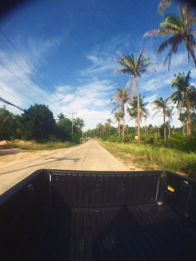 Tropical Palm Trees Thailand Trunk Ride Holiday Enjoying Life Traveling Trip Car Ride