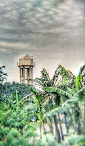 Water Tower Water Tower Ladder Banana Tree Banana Leaves Beauty In Nature Tree Nature Built Structure Green Color Outdoors Tranquility Rural Meets Urban Urban Meets Nature Somewhere In The World Somewhere Over The Rainbow Ruralphotography Somewhere Outhere Fresh Air & Nature Rural Landscape Rural Scenes RuralTreasures  Urban Geometry Miles Away Miles Away From Seeing You Rural