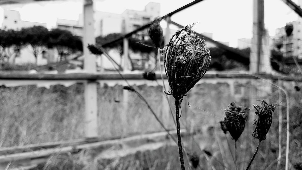 Pictures Plant Infront Of Modern Ruin In Naples Italy Black And White