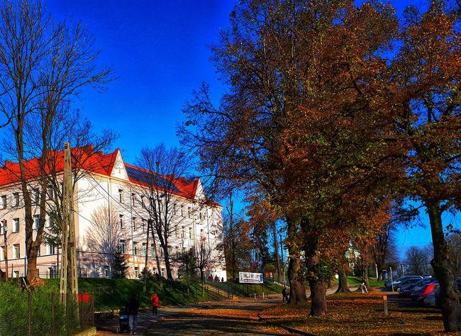 Blue Sky Trees Building School Autumn Konsti