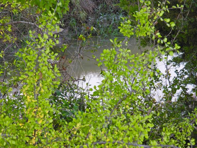 View of small creek through the brush Plant Green Color Growth Tree Water Beauty In Nature Nature No People Day Outdoors Forest Reflection