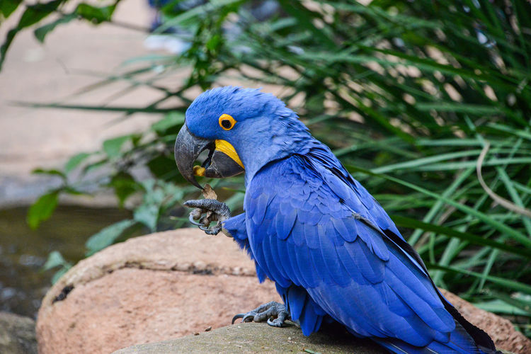 Close-up of blue parrot perching on plant