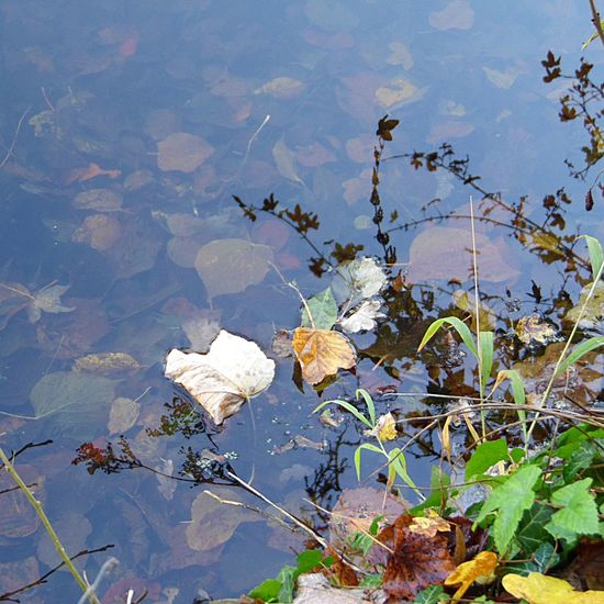 Photography Lake Water Leaves In Water Growth Branch Grass Reflection Nature Beauty In Nature Floating On Water No People Tranquility Freshness Autumn Walk