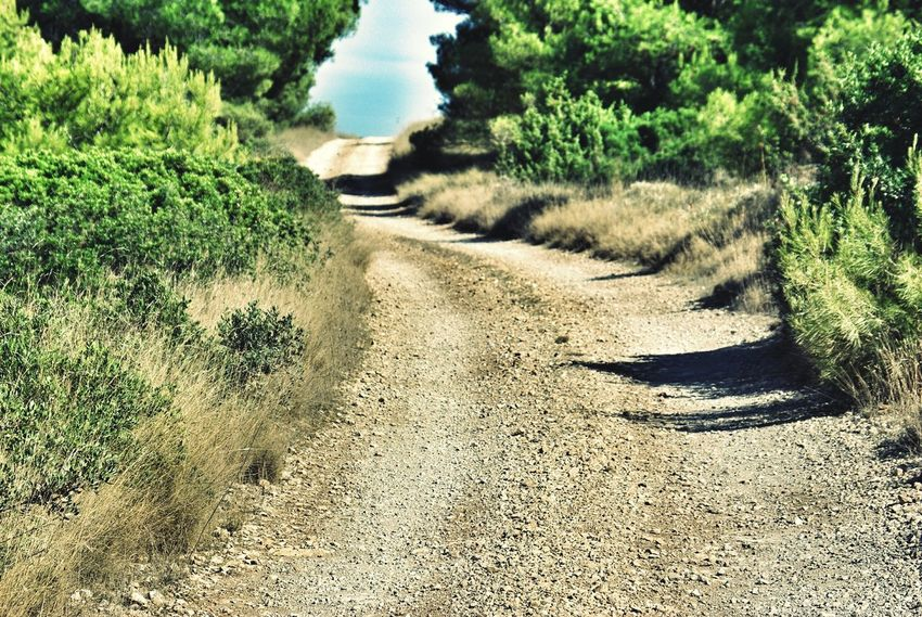 Road Dusty Road Mediterranean  Landscapes With WhiteWall Landscape Pinetrees Dry Grass Curved Road Curves