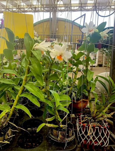 Close-up of flowering plants in greenhouse