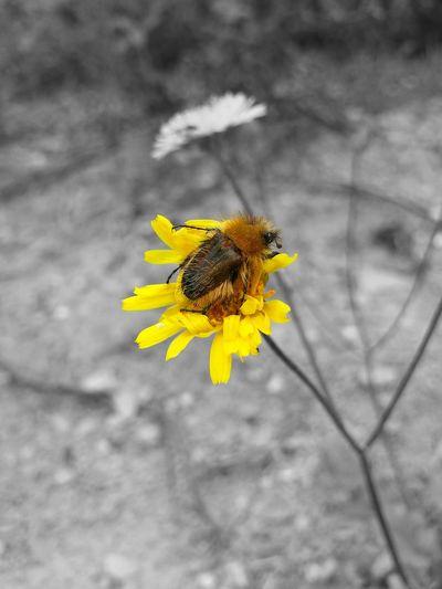 Hello World Flower çiçek Böcek Doğa Dağçileği Eyricaş