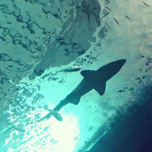 Mañana de Tiburones en el Acuario de Sevilla. Recomendable 100%