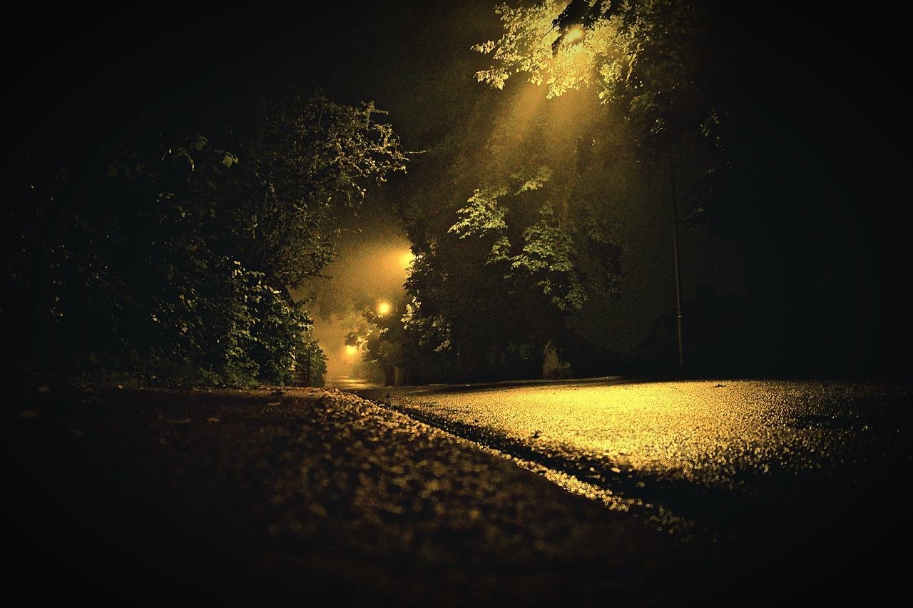 tree, night, nature, the way forward, tranquility, no people, outdoors, tranquil scene, beauty in nature, scenics, illuminated, sky