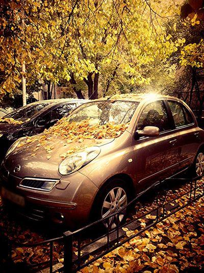 Hugging A Tree Autumn Colors Octoberphotoaday Car
