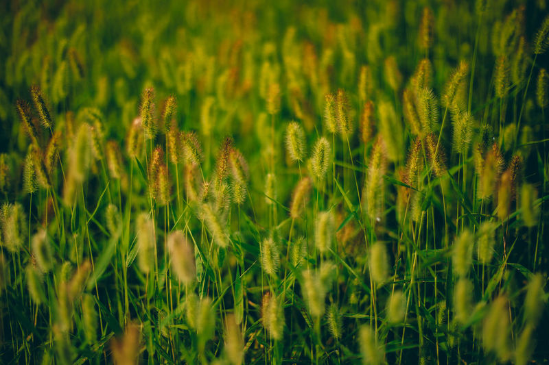 // summer green // Grass Green Summer Views Summertime Textured  Textures And Surfaces Abstract Agriculture Beauty In Nature Close-up Day Field Freshness Full Frame Grass Green Color Growth Nature No People Outdoors Plant Summer Wallpaper The Great Outdoors - 2018 EyeEm Awards