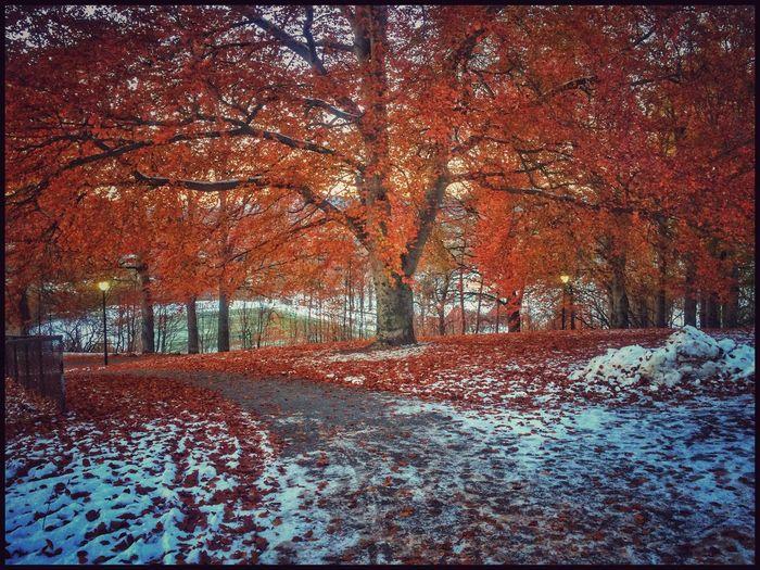 Autumn or