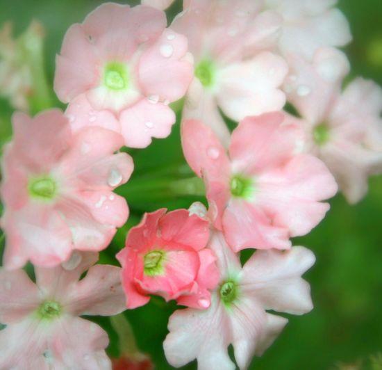 Flowers Nature Garden My Garden 花 花と庭 EyeEm Nature Lover EyeEm Flower Flowerporn EyeEm Best Shots - Flowers