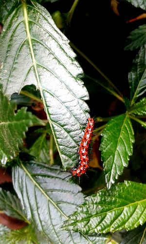 One Animal Insect Nature Day Red Plant ♥ EyeEmNewHere