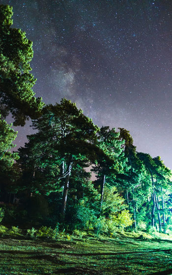 Trees & The Milky Way Nature Nightphotography Tranquility Astronomy Beauty In Nature Forest Galaxy Green Color Illuminated Illuminated Trees Landscape Milky Way Nature Night No People Outdoors Scenics Sky Space Space Exploration Star - Space Stars Starscape Tranquil Scene Tree The Week On EyeEm