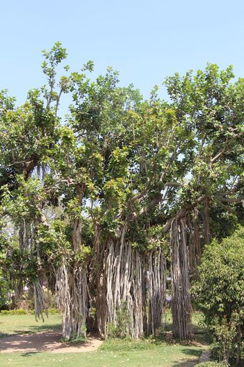 Ahmedabad India Day Landscape Nature No People Old Tree Outdoors Sky Travel Destinations Tree