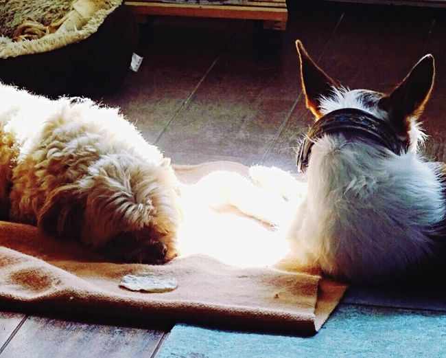Telling Stories Differently Love Dog Love Dog Taking Photos Relaxing Silence Photographer Important Mylife Mystory Partofme Thelove Sometimes A Moment Like That Says Enough Precious Moments Of Life PreciousMoments Life Animals Sun