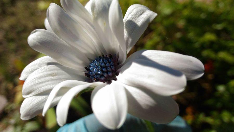 белый цветок крупным планом EyeEmNewHere цветы цветок  Цветок цветы красота белые цветы белый цветок лето природа и красота Flowers Summer Flowers, Nature And Beauty