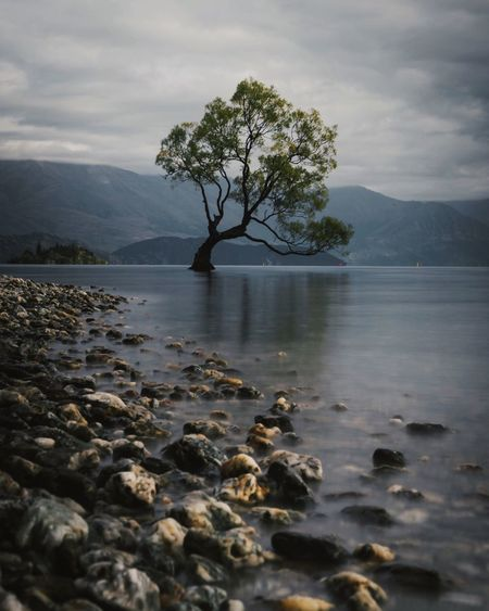 That Wanaka Tree, New Zealand | @lostboymemoirs - A long exposure photograph of the iconic Wanaka tree on the South Island of New Zealand growing out of the silky water on an overcast moody day. Reflection Sony Alpha Low Angle Tourism Travel EyeEm Best Shots The Week on EyeEm New Zealand That Wanaka Tree Water Sky Tree Cloud - Sky Tranquility Beauty In Nature Tranquil Scene Scenics - Nature Sea Idyllic Outdoors Plant Nature Mountain No People My Best Photo