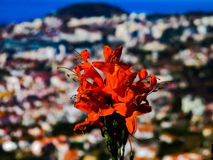 Close-up of orange red flowering plant
