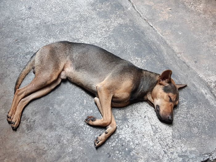 The dog is sleeping on the cement floor Animal Pet Dog Cement Floor Sand Relaxation High Angle View Close-up Sleeping