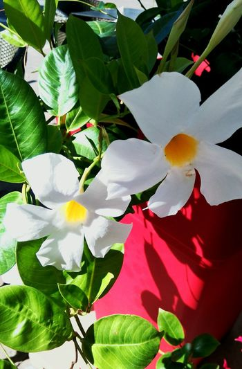Nature Flowers Flower Nature Photography Beautiful Nature White Naturelovers Flowerwhite Village Flower Collection
