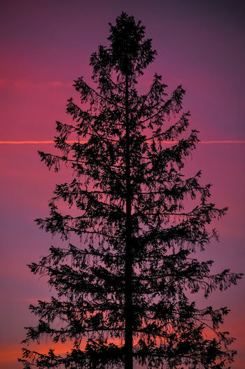 Magic Hour Beauty In Nature Coniferous Tree Forest Growth Idyllic Land Low Angle View Moody Nature Night No People Outdoors Pine Tree Plant Scenics - Nature Silhouette Sky Sunset Tranquil Scene Tranquility Tree Tree Trunk Trunk Wallpaper Capture Tomorrow