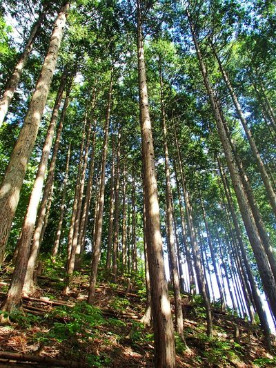 2013 Beauty In Nature Forest Light Mountain Nature Outdoors Sun Trecking Tree 山 木 森 川苔山