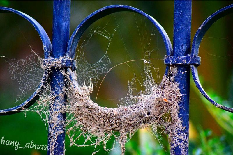 Spider Nature Net السعودية  شبكة عنكبوت Check This Out