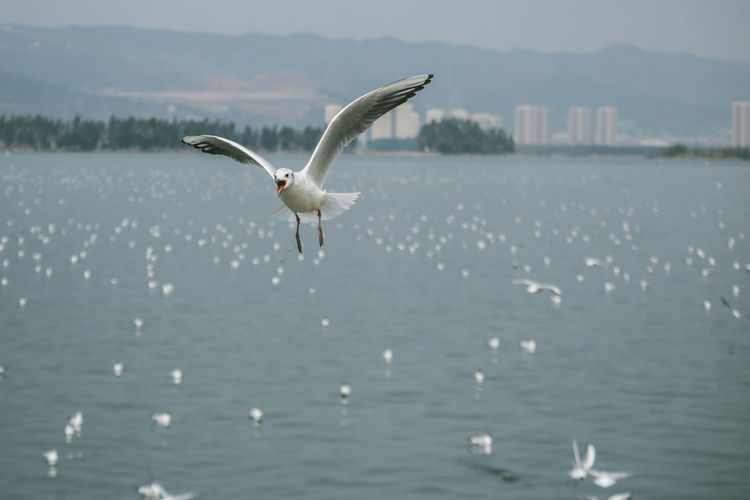 Animal Animal Themes Animal Wildlife Animals In The Wild Beauty In Nature Bird Day Flying Focus On Foreground Mid-air Nature No People One Animal Outdoors Sea Seagull Spread Wings Vertebrate Water Waterfront