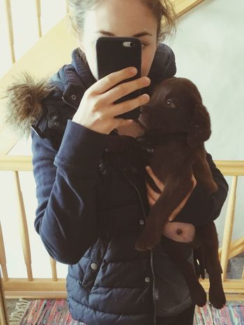 my little babyboy Balu Labrador Puppy Welpe
