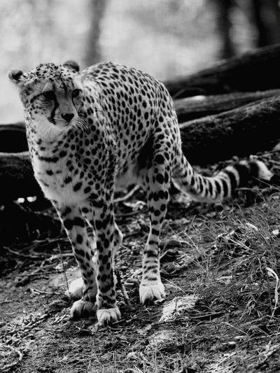 Shades Of Grey Beautiful Nature Jungle VIP