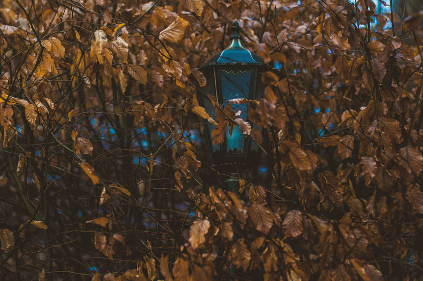 contrasts Architecture Beauty In Nature Building Exterior Built Structure Day Lamp Leaves Nature No People Outdoors