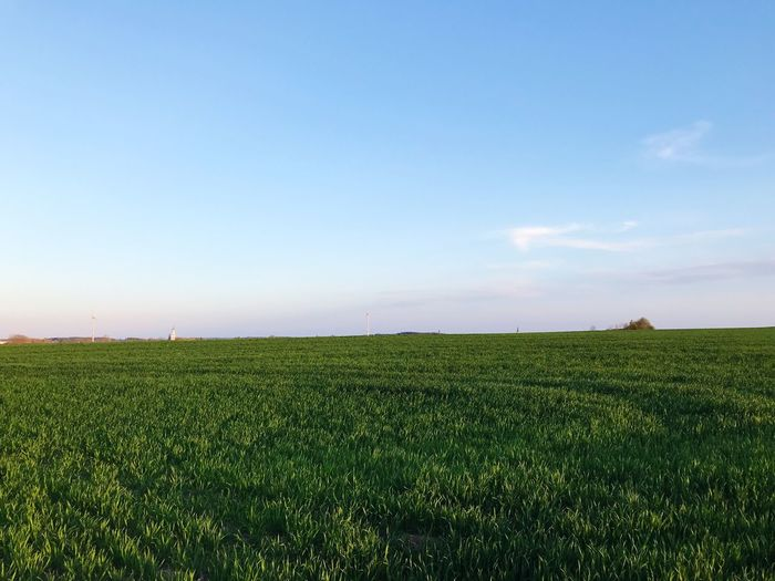 Sky Field Plant Green Color Land Growth Tranquil Scene Tranquility Landscape Scenics - Nature Agriculture Beauty In Nature Horizon Day Rural Scene Nature