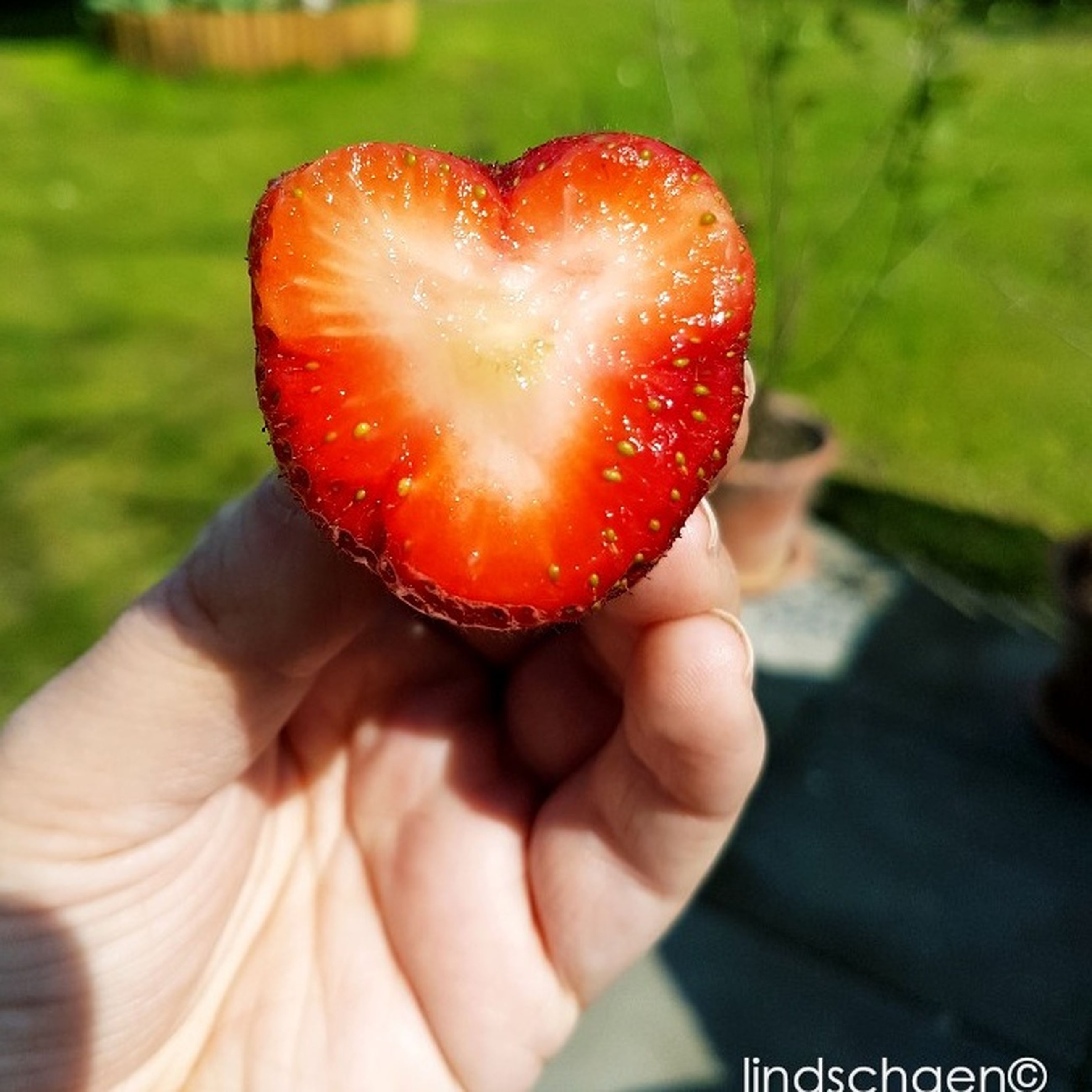 human hand, human body part, fruit, one person, real people, holding, human finger, red, food and drink, food, freshness, healthy eating, close-up, focus on foreground, lifestyles, outdoors, day, men, nature, people