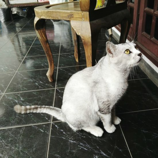 Waiting... 🐈 Cats Of EyeEm Chesshire