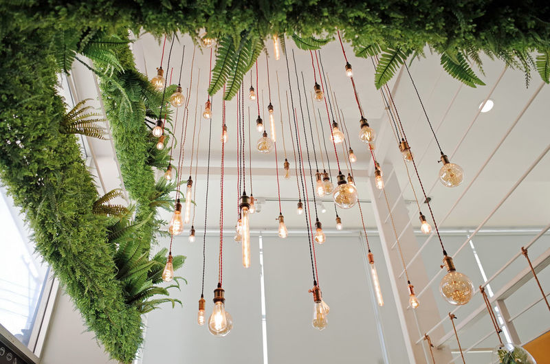 Tree Plant Low Angle View No People Lighting Equipment Hanging Decoration Illuminated Nature Growth Palm Tree Tropical Climate Day Indoors  Green Color Luxury Wealth Architecture Light Bulb Ceiling