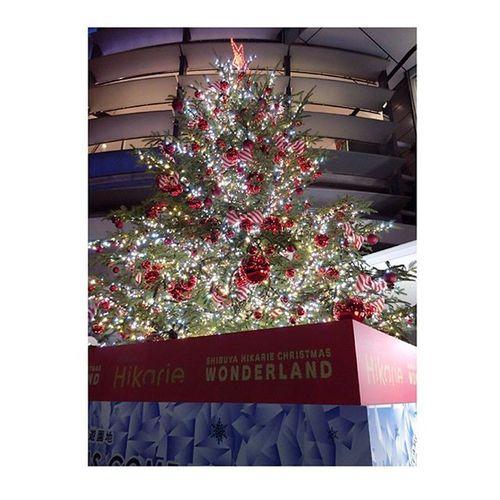 ✩✩✩クリスマスツリー クリスマスツリー Christmas 今年 ももうこの季節 か〜。早いな 渋谷 ヒカリエ 前