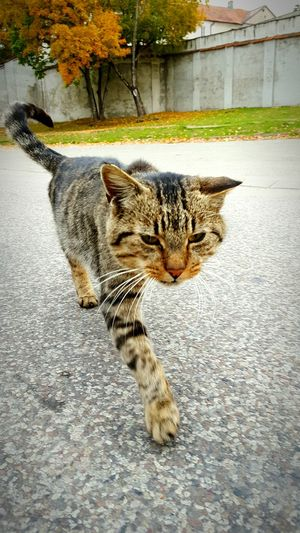 Cat♡ Cat Lovers cat Cats 🐱 cat Nature Photography Popular Photos Good Times Mobile Artist Mobile Photography Animals Nature_collection