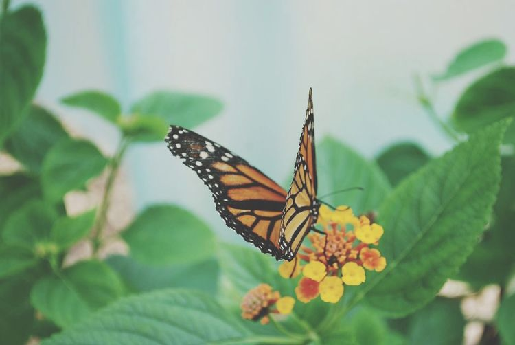Butterfly EyeEm Selects Butterfly - Insect Insect Animal Themes Butterfly Animals In The Wild Nature